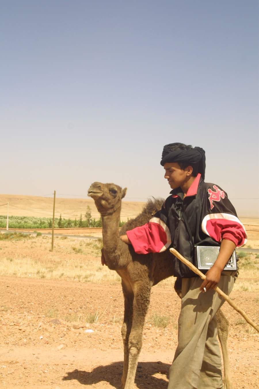 Pastir kamel - Maroko