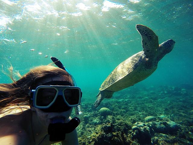 Apo Island - želvji otok