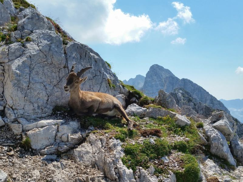 zahodne julijske alpe