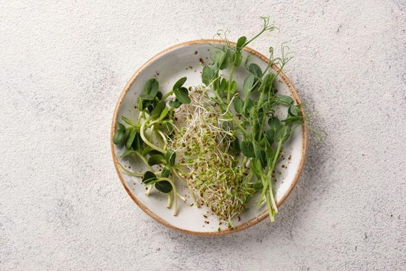 mikro zelenjava