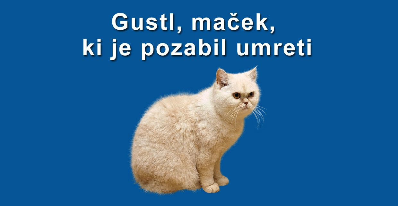 gustl macek